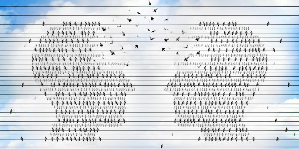Communication network idea and concept for networking and teamwork or a symbol for a business group working together as groups of birds on electric wires shaped as a human head merging to unite for success.